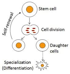 MS Biology Thesis - Graduate MSPSMPhD